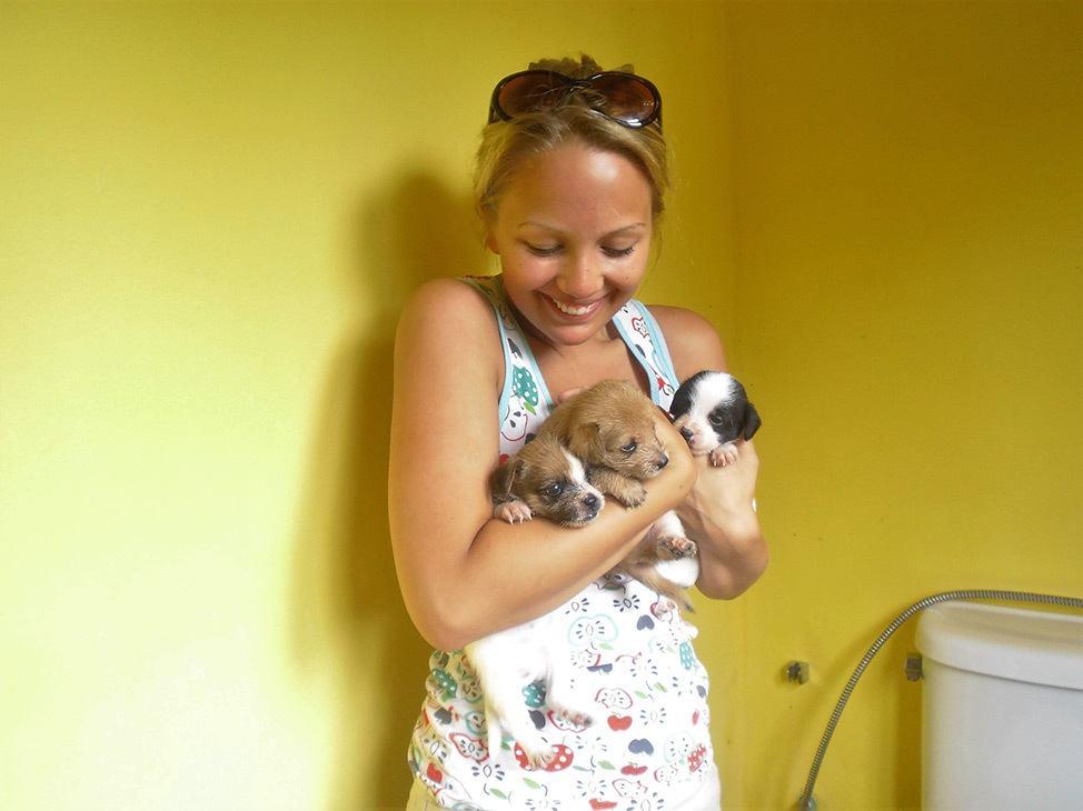 Koh Tao Animal Clinic