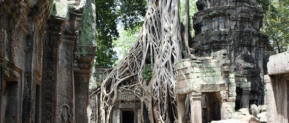 Ta Prohm Angor Wat