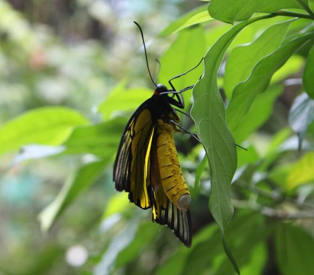 Kuala Lumpur Butterfly Gardens