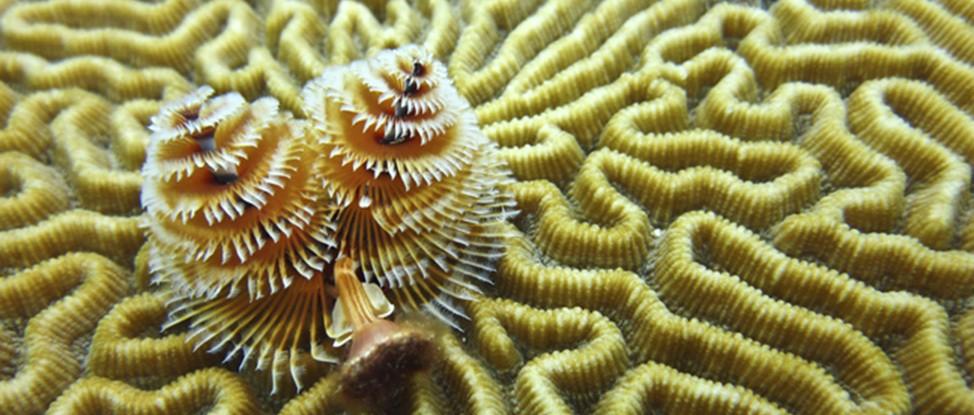 Diving Roatan thumbnail