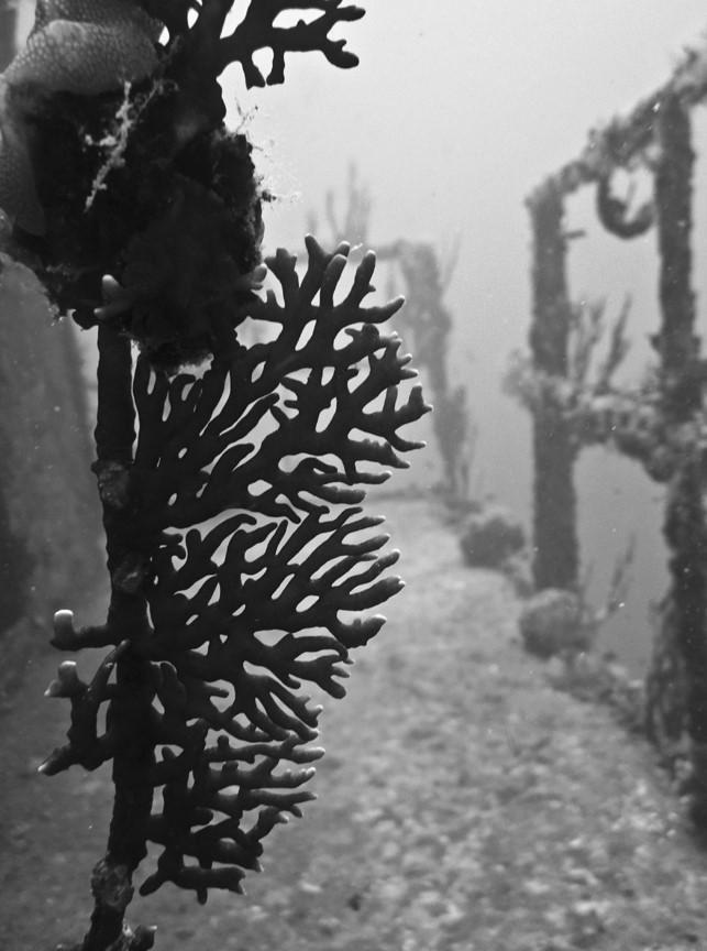 Diving Utila, Honduras