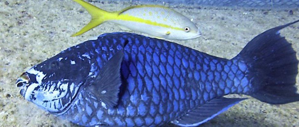 Bahamas Day 3: Fish Above and Below the Surface thumbnail