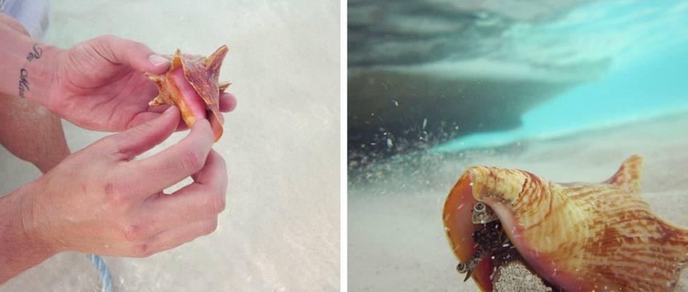 Bahamas Day 2: Iguanas and Islands thumbnail