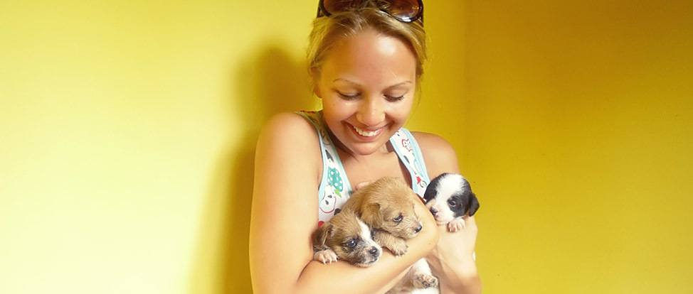 Koh Tao Animal Shelter