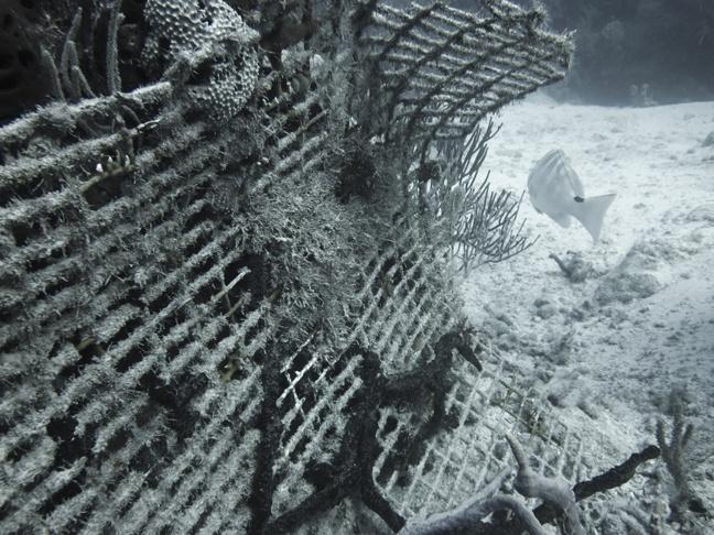 Bahamas Scuba Diving