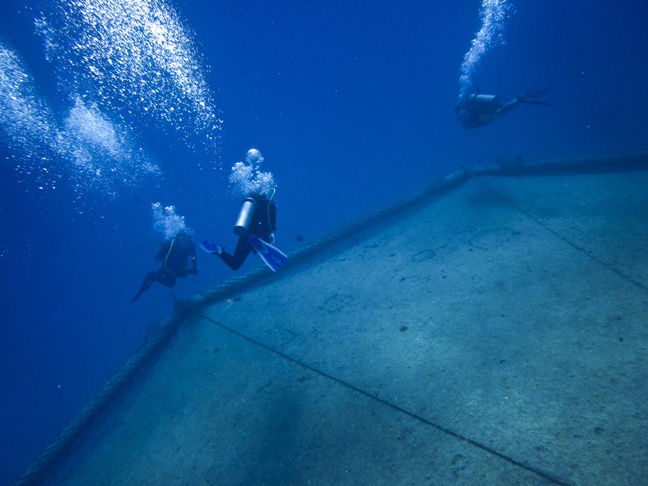 Cobia Cage Bahamas Diving