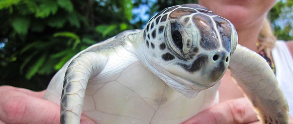 Cayman Tourist: The Turtle Farm Boatswain's Beach thumbnail