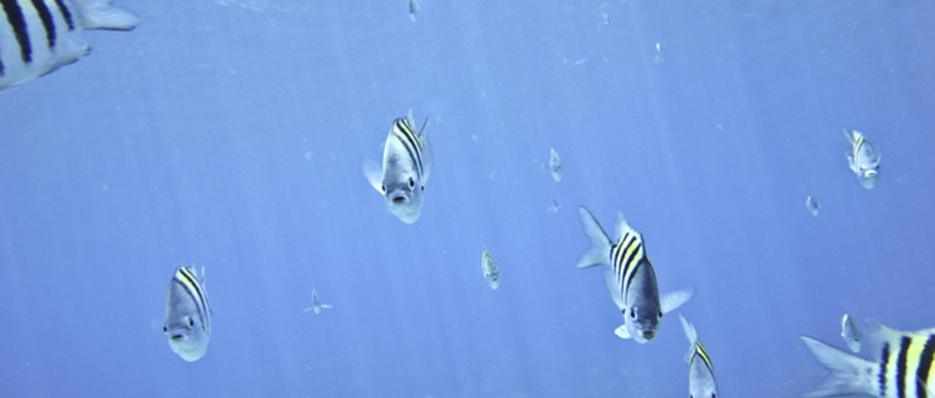 Underwater in Five Senses thumbnail