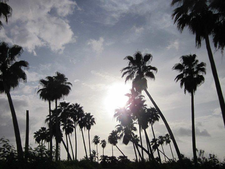 Cayman Sunset