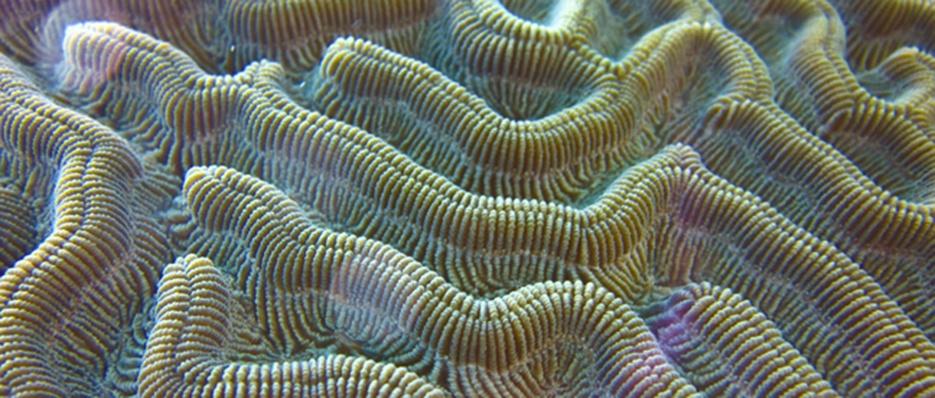 When The Traveler Goes To Art School: Underwater Printmaking thumbnail
