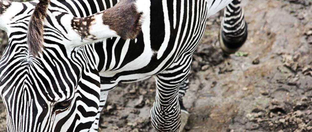 Getting Wild at the Edinburgh Zoo thumbnail