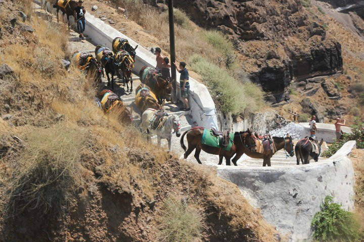 Santorini Donkey Rides