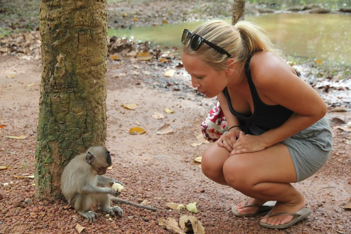 Angkor Thom Monkeys