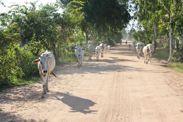 Phnom Tamao