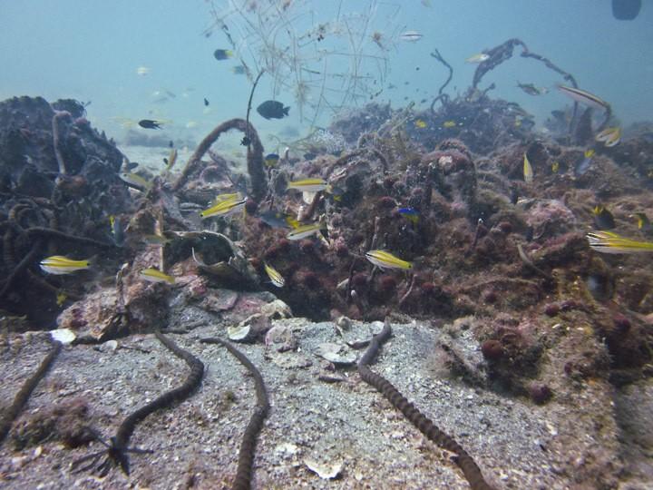 Diving in Cambodia