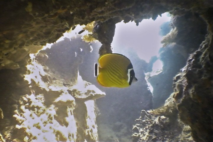Butterfly Fish in Cave