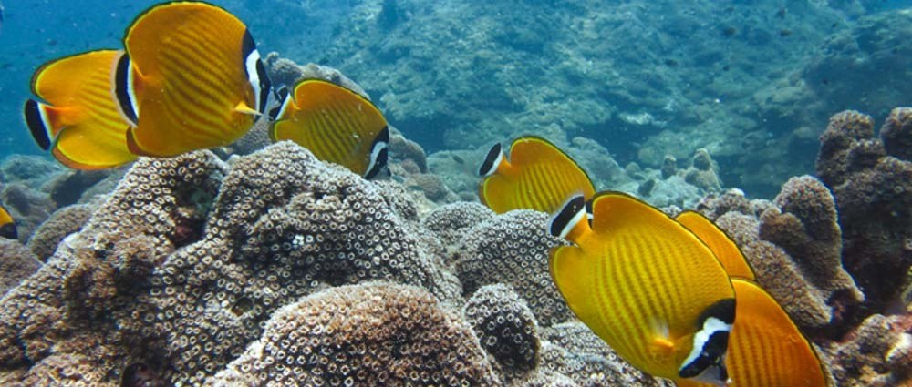 Happy Ocean Day thumbnail