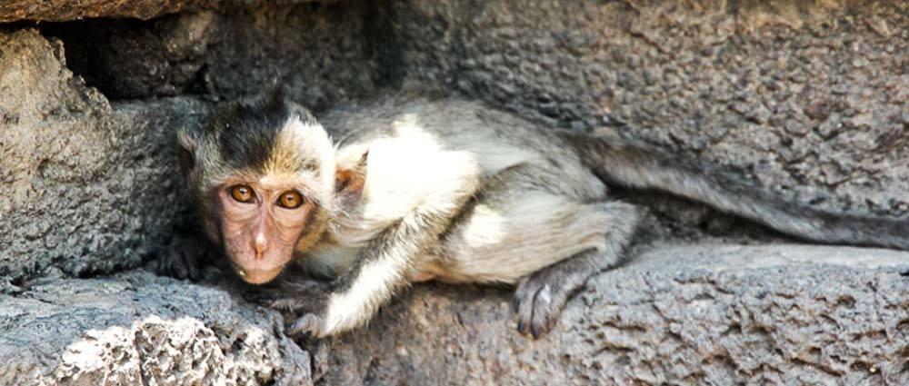Lopburi Part II: Monkeys and Museums thumbnail