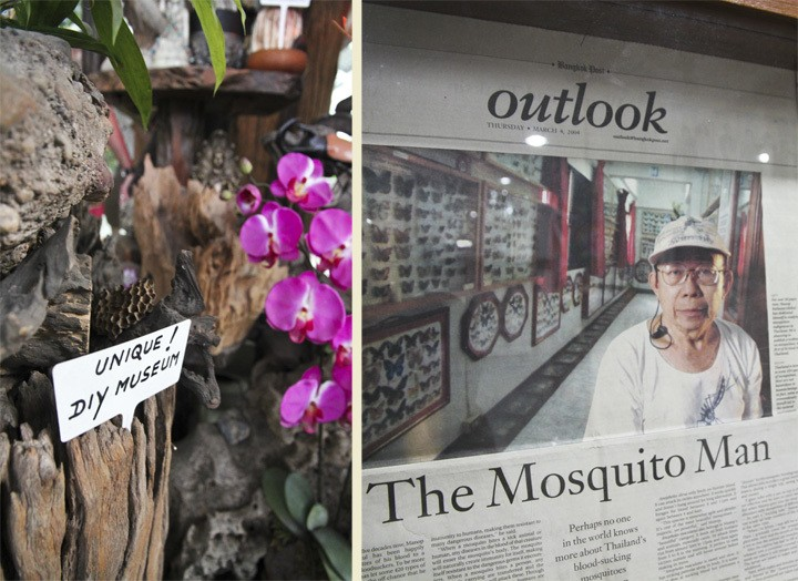 Chiang Mai Insect Museum