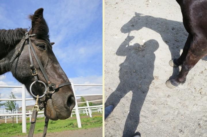 Horseback Riding in Iceland