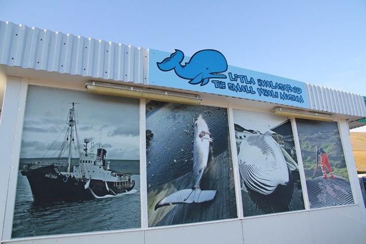 Hvalasafnid Whale Museum