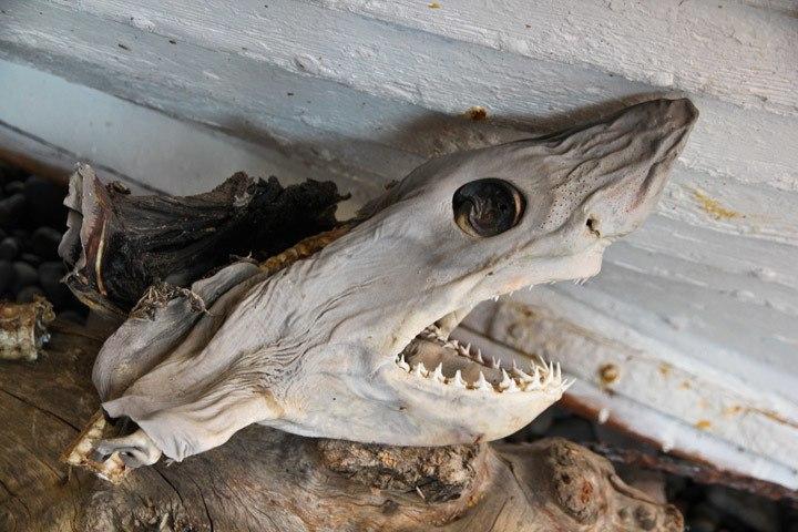 Bjarnarhöfn Shark Museum