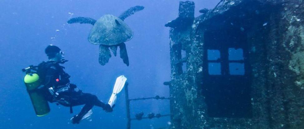 Diving in Oahu thumbnail