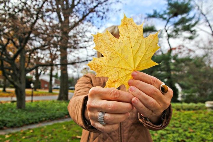 Fall in Albany, NY