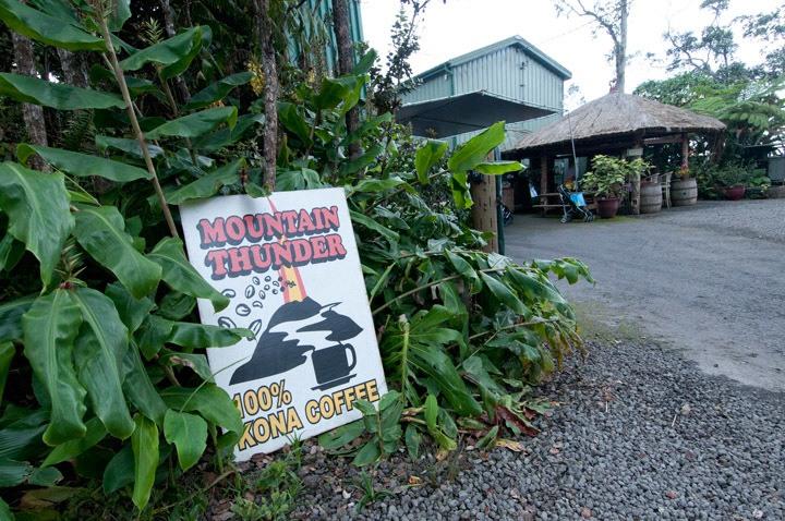 Big Island Coffee Tour