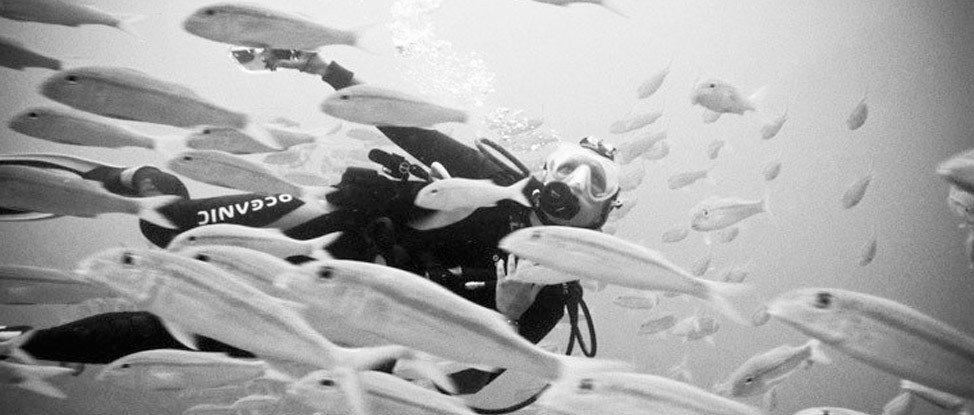 Diving on the Big Island thumbnail