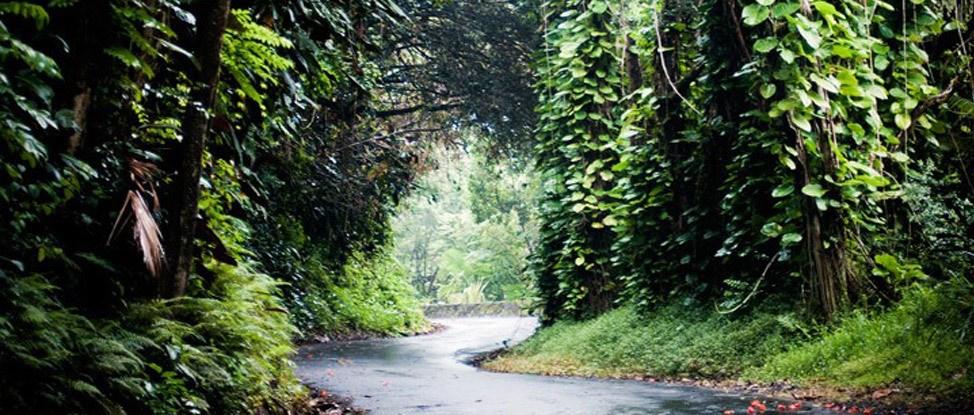Big Island Road Trip… Continued! thumbnail