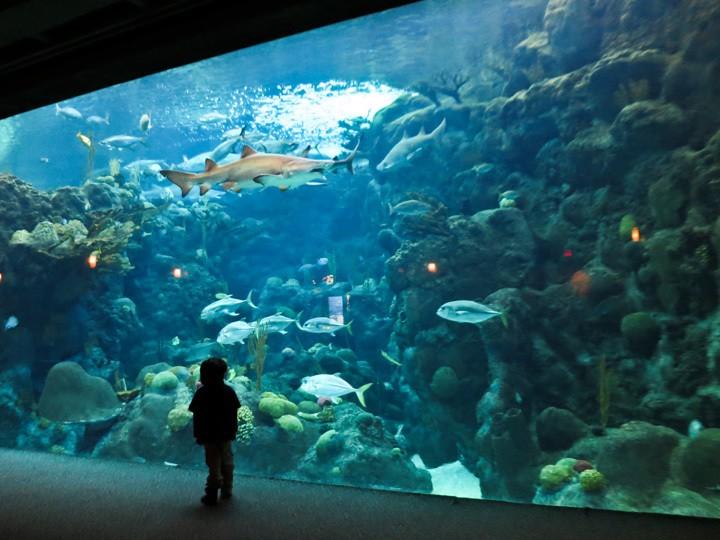 Aquarium_013