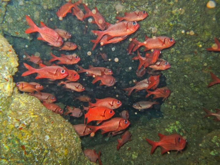 Diving Lanai