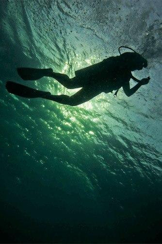 Koh Tao Dive
