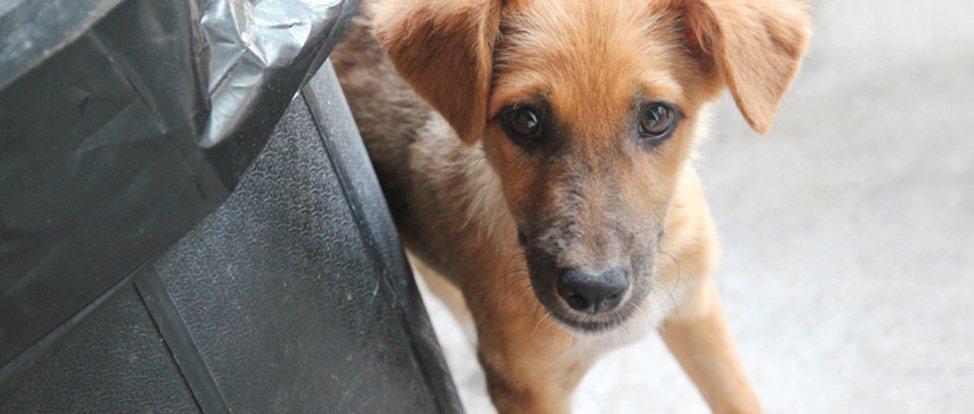 Open Passport, Open Heart: The Koh Tao Animal Clinic thumbnail