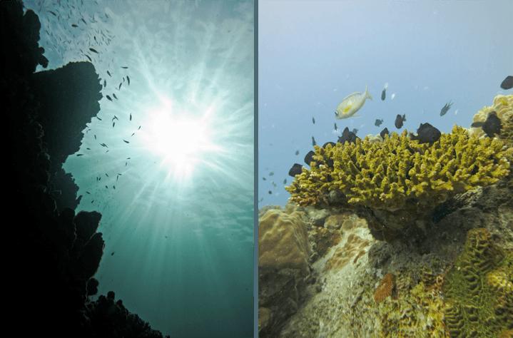dsd diving_032