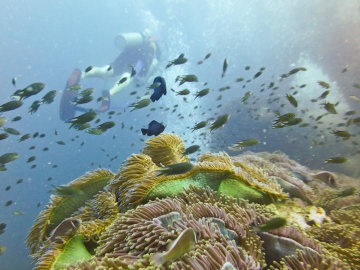 Chumphon Dive Site, Koh Tao