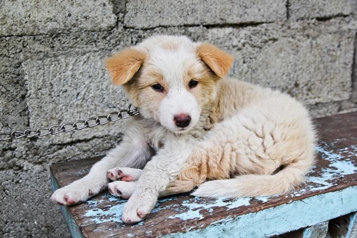 Dog in Banaue, Philippines