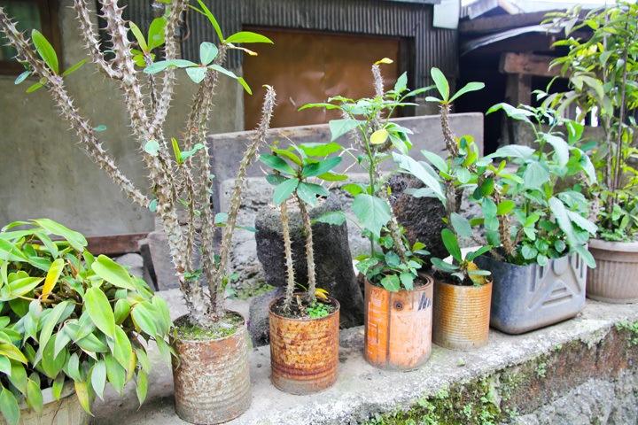 Plants in Banaue, Philippines