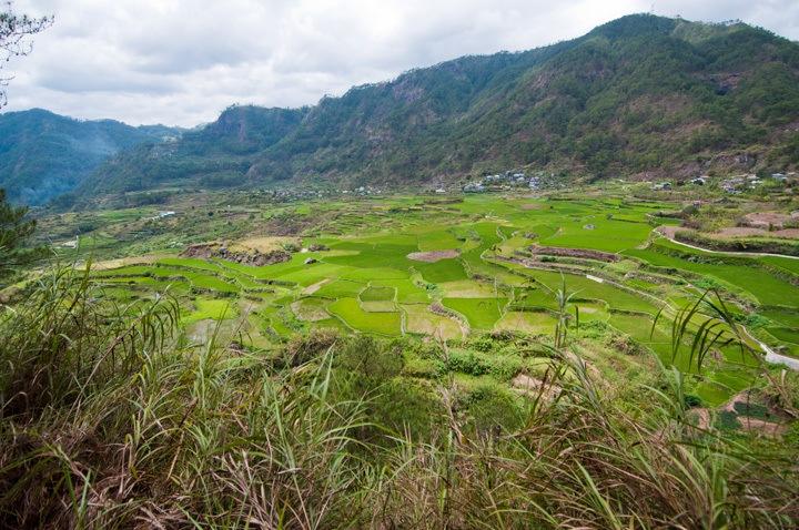 Rice Terraces, Sagada
