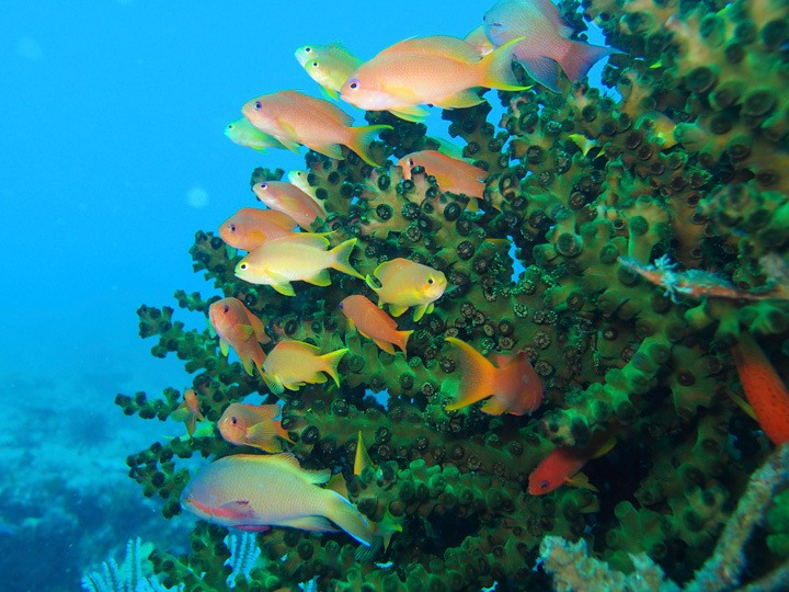 Diving in Donsol, Philippines