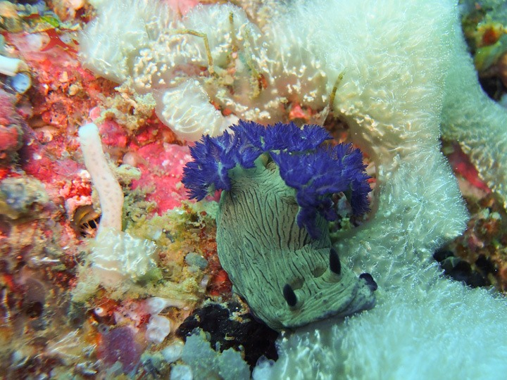 Diving in San Miguel, Philippines