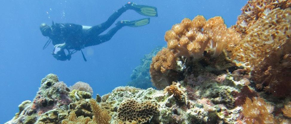 Diving in Malapascua thumbnail