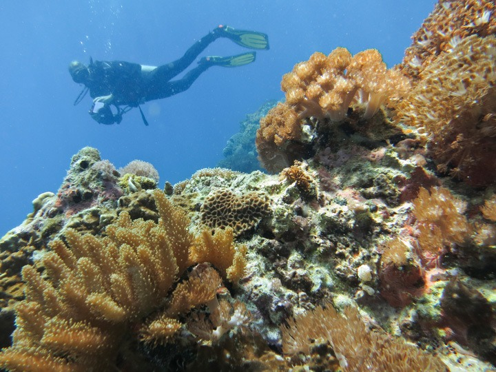 Diving at Gato Island, Malapascua