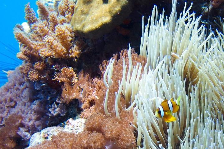 Diving Gato Island, Philippines