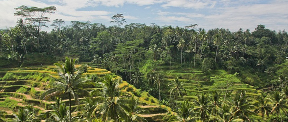 Blissing out in Ubud, Bali thumbnail