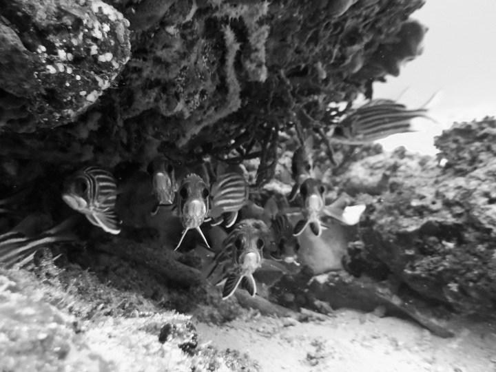 Night Diving Phobia
