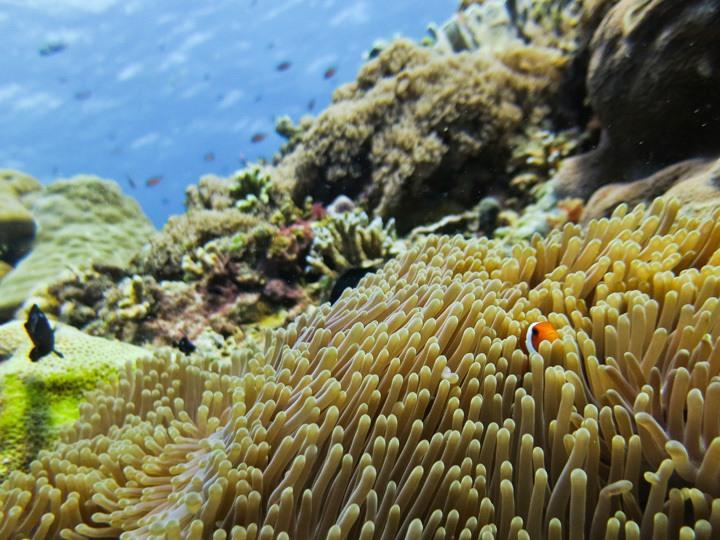 Diving on Gili Trawangan, Indonesia