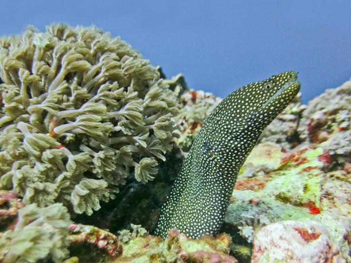 An Eel in Gili Trawangan
