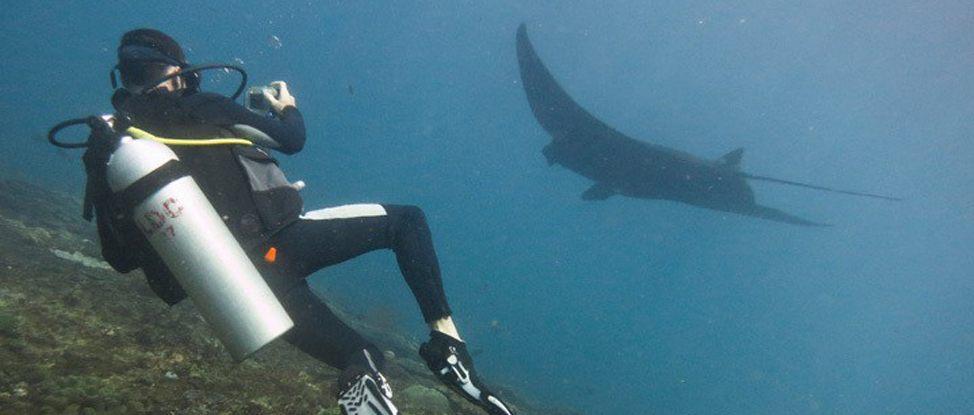 Diving in Nusa Lembongan thumbnail